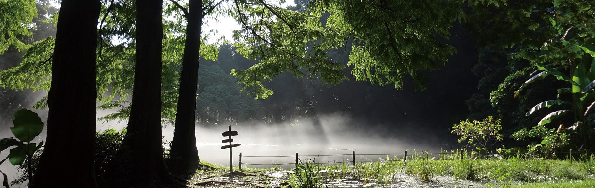 お手水の森TOP_大池